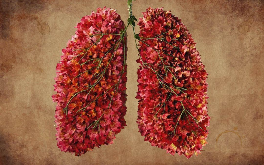 Heilung für die Lunge…