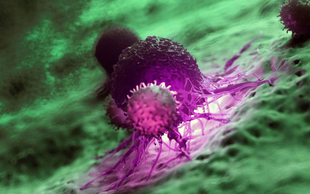 Makrophagen-Transplantation